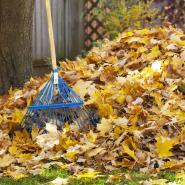 Rake and autumn leaves